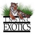Insync Exotics (InsyncExotics)