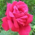 Karthiga devi (smileflower_kr)